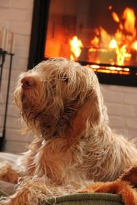 Shaggy dog next to fireplace