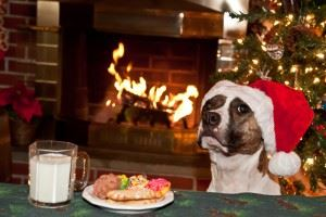 Dog in Santa hat next to cookies and milk