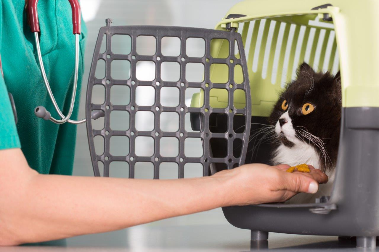 Cat being placed in carrier